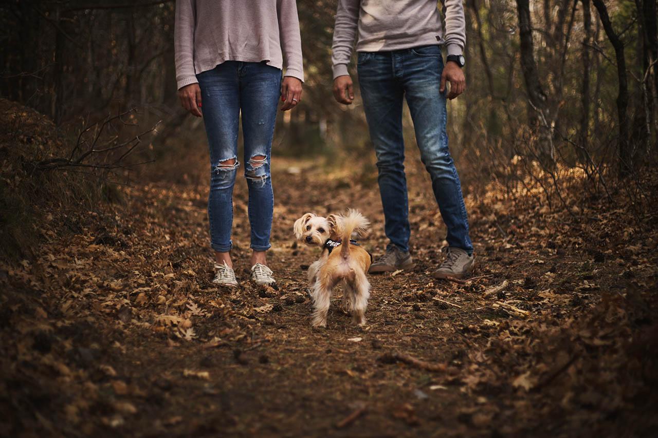 preboda con mascotas