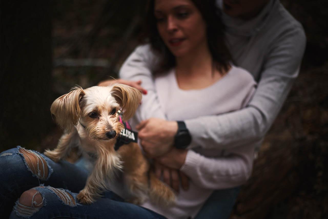 preboda con perros en Zaragoza
