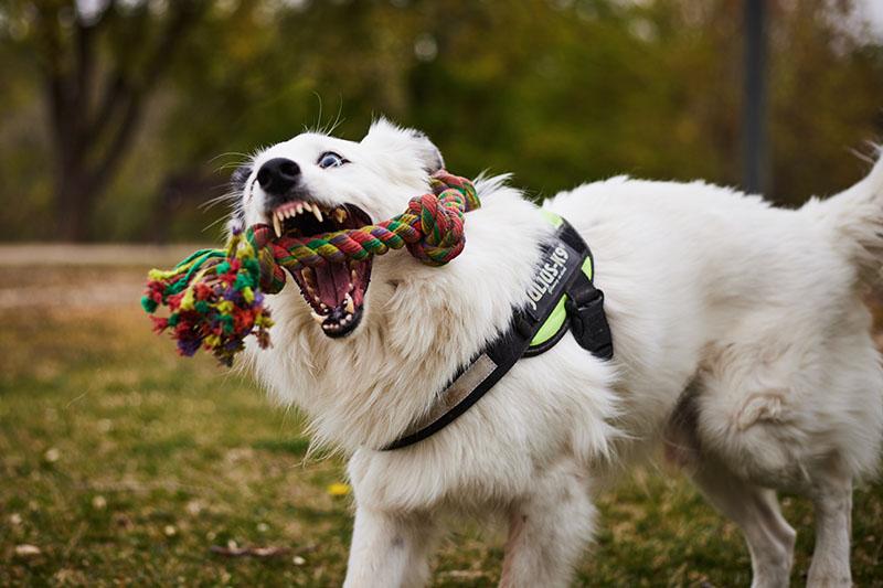 preboda perros